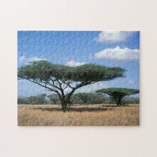 Umbrella Thorn Acacia (Acacia tortilis), Mkuze Jigsaw Puzzle