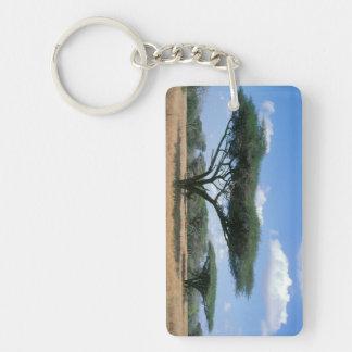Umbrella Thorn Acacia (Acacia tortilis), Mkuze Key Ring