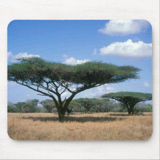 Umbrella Thorn Acacia (Acacia tortilis), Mkuze Mouse Pad