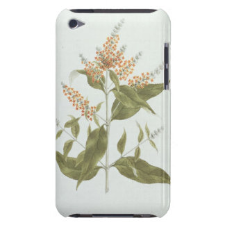 Umtar (Buddleia polystachya) (w/c over graphite on iPod Touch Cases