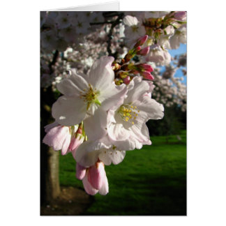Un Opened Blossom Greeting Card