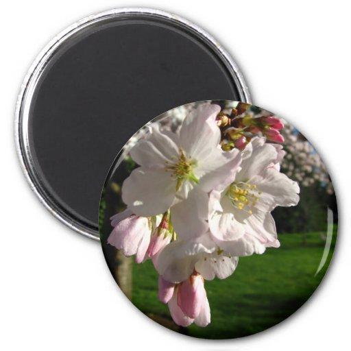 Un Opened Blossom Fridge Magnet