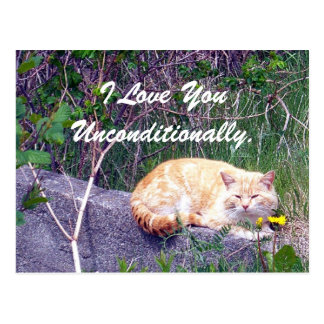 Unconditional Postcard