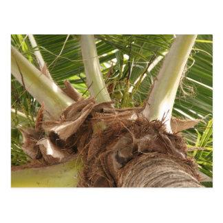 Under Palm Postcard