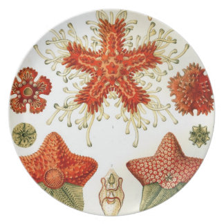 Under the Sea Starfish Plate Ernst Haeckel