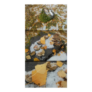 Under the snow. The stump. Approximation