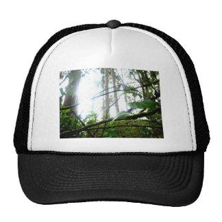 Underbrush Cap