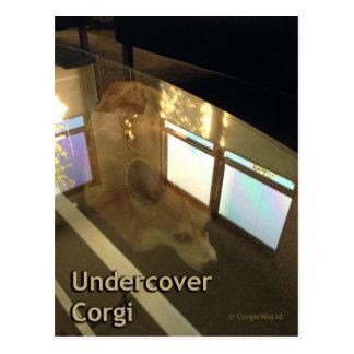 Undercover Corgi Postcard