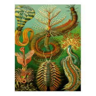 Undersea Color Postcards
