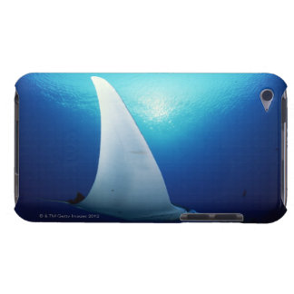 Underside of a manta ray barely there iPod covers