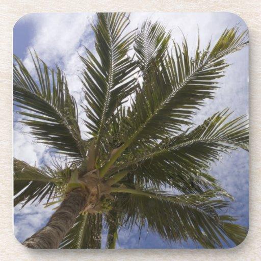 Underside of Palm Tree Drink Coaster