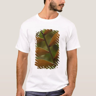 Understory palm detail. Mindo Cloud Forest. T-Shirt