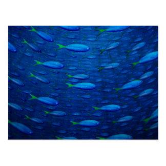 Underwater 4 postcards