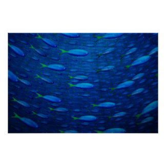 Underwater 4 poster
