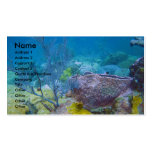 Underwater Business Card
