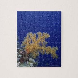 Underwater Coral Puzzles