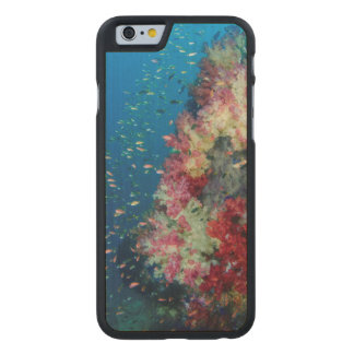 Underwater coral reef, Indonesia Carved® Maple iPhone 6 Case