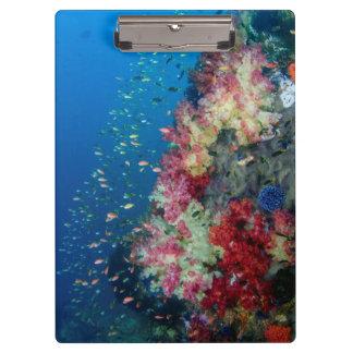 Underwater coral reef, Indonesia Clipboard