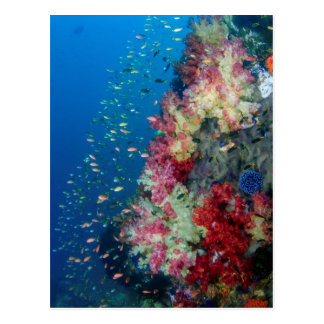 Underwater coral reef, Indonesia Postcard