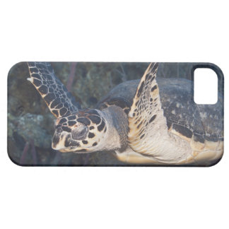 Underwater Life: A Hawksbill Sea Turtle 2 Barely There iPhone 5 Case