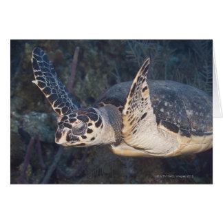 Underwater Life: A Hawksbill Sea Turtle 2 Card