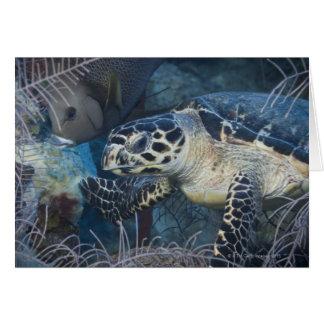 Underwater Life: A Hawksbill Sea Turtle Card