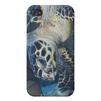 Underwater Life: A Hawksbill Sea Turtle iPhone 4/4S Cover