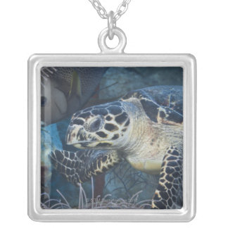 Underwater Life: A Hawksbill Sea Turtle Silver Plated Necklace