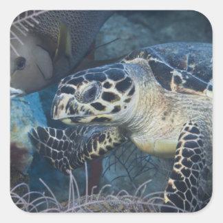 Underwater Life: A Hawksbill Sea Turtle Square Sticker