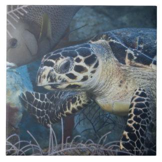 Underwater Life: A Hawksbill Sea Turtle Tile
