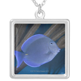 Underwater life: Acanthurus coeruleus with sea Silver Plated Necklace