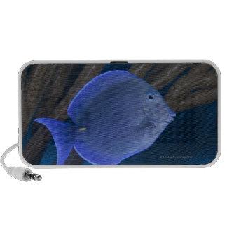 Underwater life: Acanthurus coeruleus with sea PC Speakers