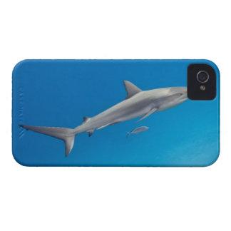 Underwater life: Carcharhinus perezi swimming in iPhone 4 Case-Mate Case