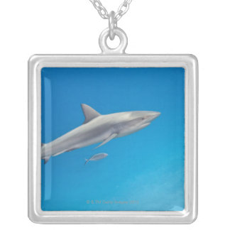 Underwater life: Carcharhinus perezi swimming in Silver Plated Necklace