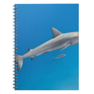 Underwater life: Carcharhinus perezi swimming in Spiral Notebook