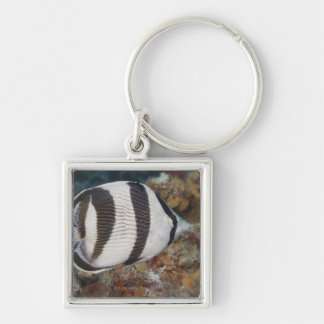 Underwater Life; FISH:  A Banded Butterflyfish Key Ring