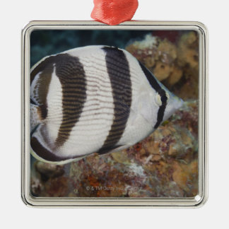 Underwater Life; FISH:  A Banded Butterflyfish Silver-Colored Square Decoration