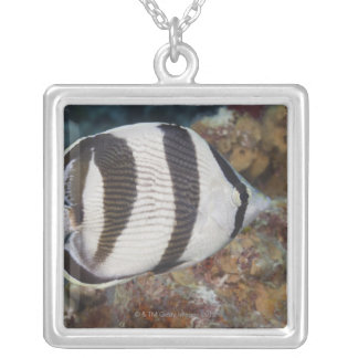 Underwater Life; FISH:  A Banded Butterflyfish Silver Plated Necklace
