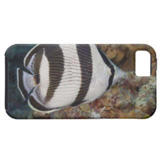 Underwater Life; FISH:  A Banded Butterflyfish Tough iPhone 5 Case