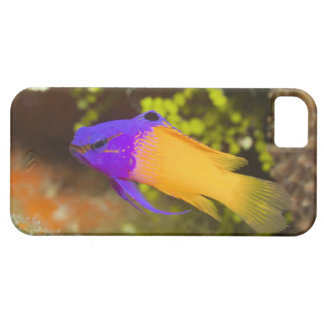 Underwater Life, FISH:  a colorful Fairy Basslet Case For The iPhone 5