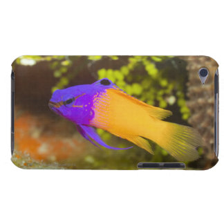 Underwater Life, FISH:  a colorful Fairy Basslet iPod Case-Mate Cases