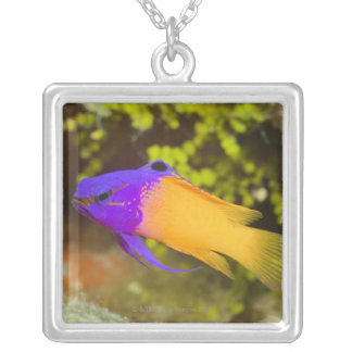Underwater Life, FISH:  a colorful Fairy Basslet Silver Plated Necklace