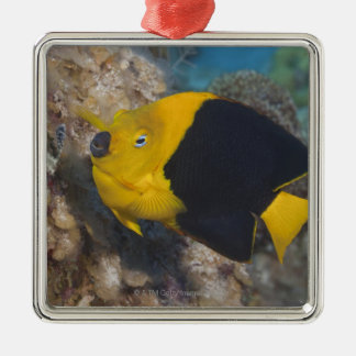 Underwater Life, FISH:  A colorful Rock Beauty Christmas Ornament