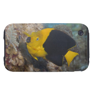 Underwater Life, FISH:  A colorful Rock Beauty iPhone 3 Tough Case