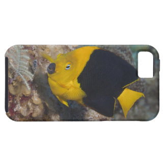Underwater Life, FISH:  A colorful Rock Beauty iPhone 5 Cover