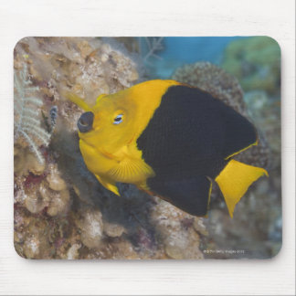 Underwater Life, FISH:  A colorful Rock Beauty Mouse Mat