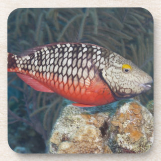 Underwater Life, FISH: a colorful Stoplight Beverage Coasters