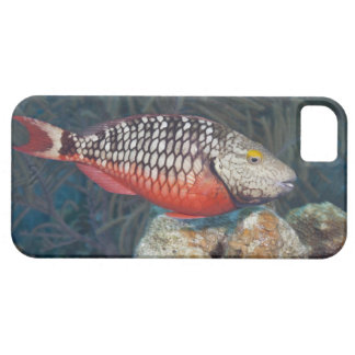 Underwater Life, FISH: a colorful Stoplight Case For The iPhone 5