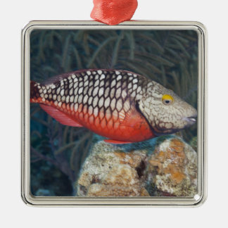 Underwater Life, FISH: a colorful Stoplight Christmas Ornament