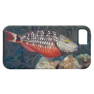 Underwater Life, FISH: a colorful Stoplight iPhone 5 Case